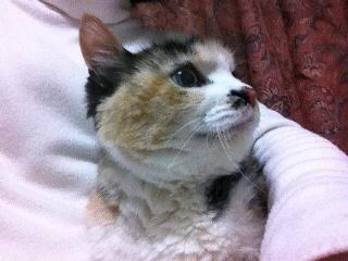 ストーカーの猫