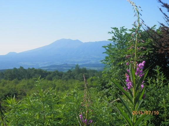 ヤナギランと浅間山