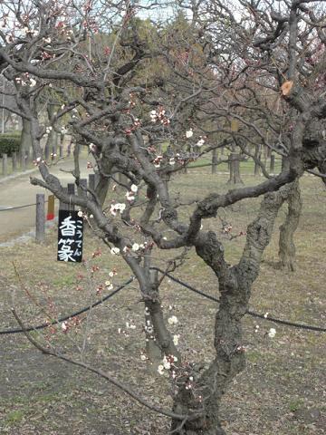大阪城公園にて⑪