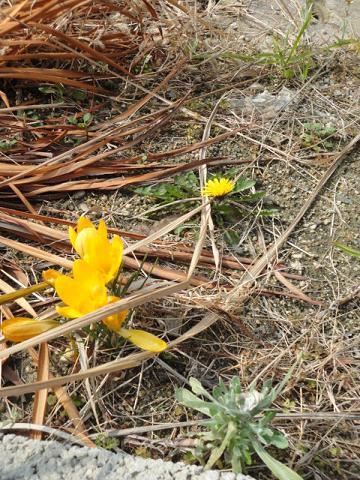 今日の知人の畑で花②