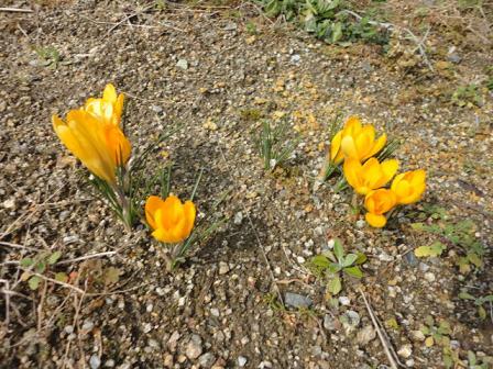 今日の知人の畑で花①