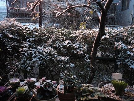 夕方から雪が②