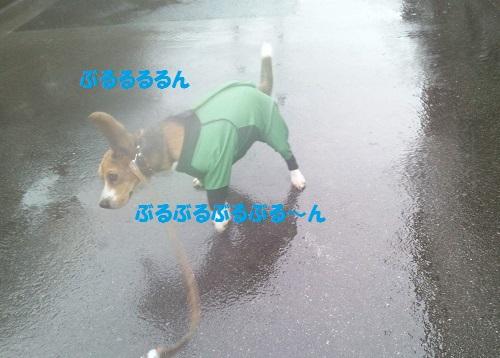 SBSH2188[1]