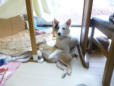 P1070697oyako.jpg