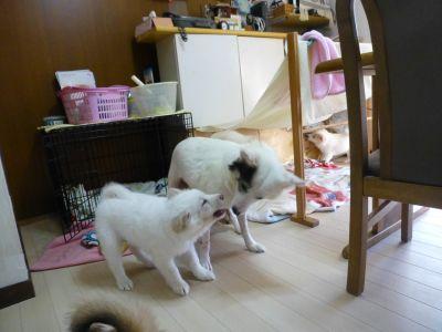 P1070969oyako2.jpg
