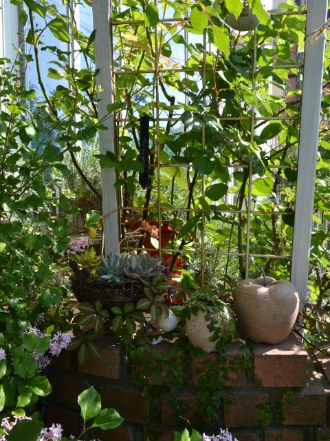初夏庭の多肉植物