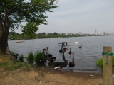 公園内の千波湖