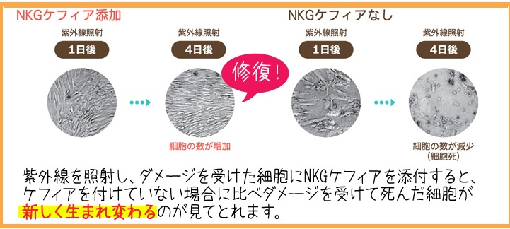 pgel_new_04.jpg