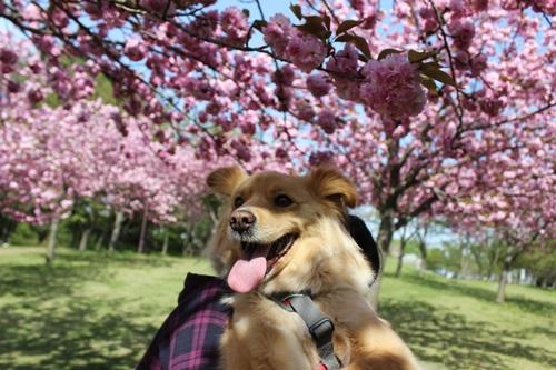 IMG_9172桜