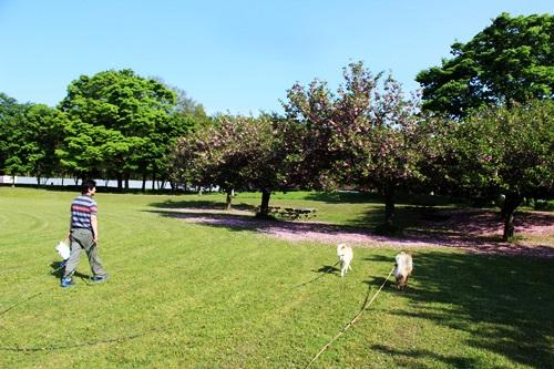 IMG_9350公園