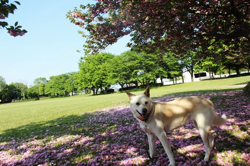 IMG_9346公園