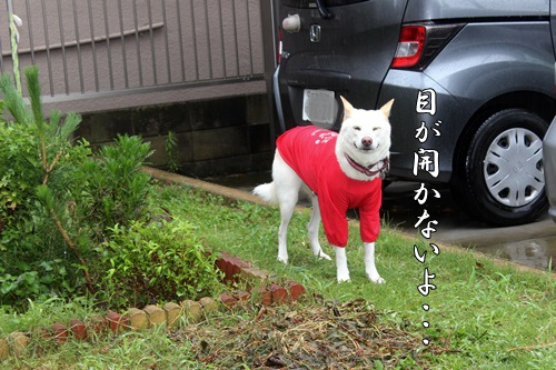 IMG_0125台風