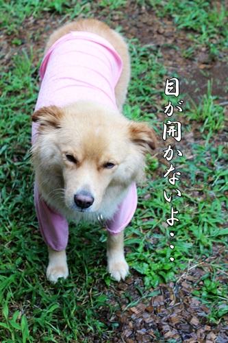 IMG_0122台風