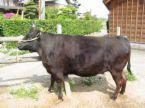 松阪牛と三重牛