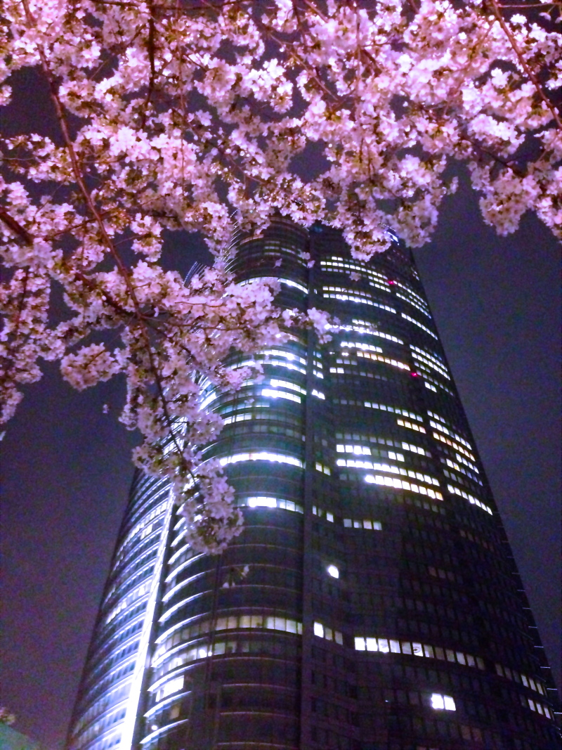 六本木ヒルズ  桜ライトアップ