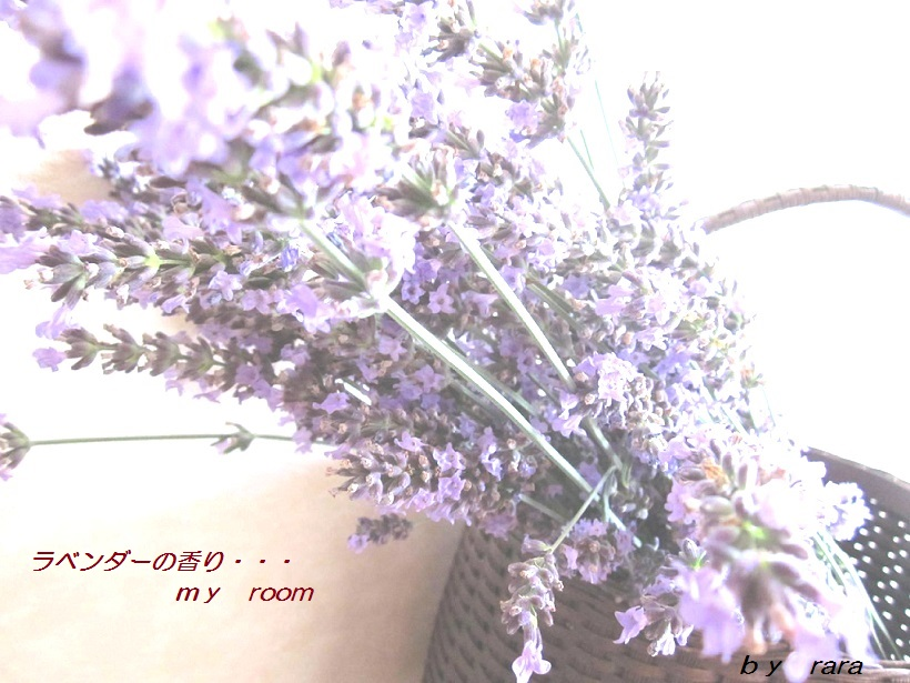 IMG_44351.jpg