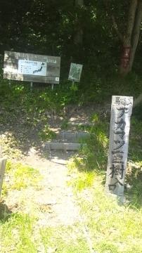 浅虫赤松 (3)_600