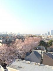 sakurazaka_0330.jpg