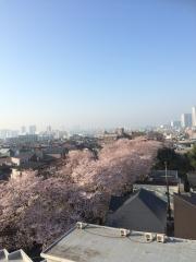 sakurazaka_0331.jpg