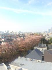 sakurazaka_0409.jpg