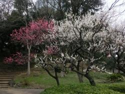 芝公園梅林
