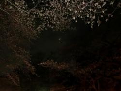 朧月夜・上野公園 2015.3.24