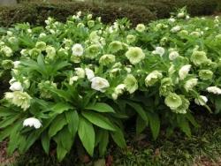 昭和記念公園 2015.4.16