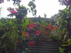 備瀬フク木並木通りの花
