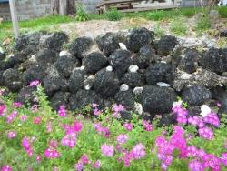 珊瑚の花壇
