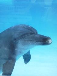 イルカ(Dolphin)
