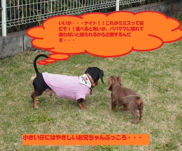 124_convert_20150422191253.jpg
