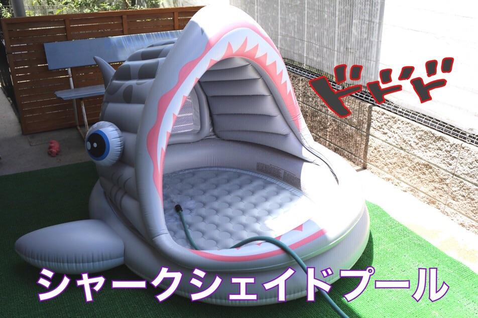フレブル プール 子犬 クリーム 1
