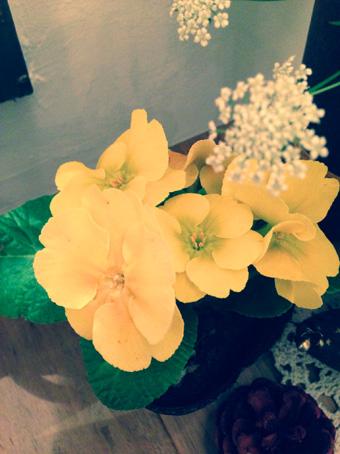 お客様に頂いたお花