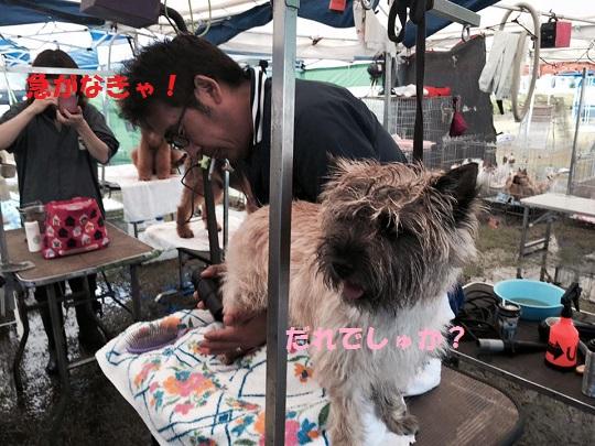 20150703御前崎キャンディ4
