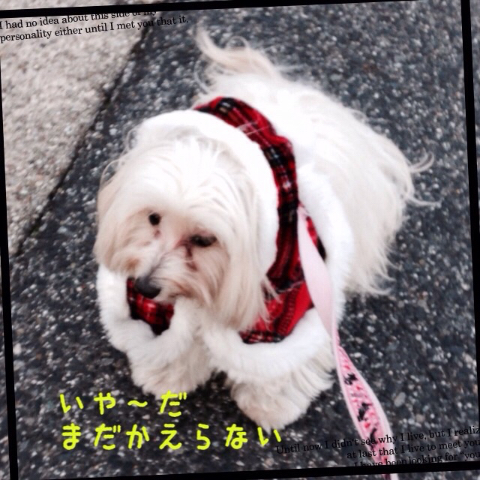 20141224190806ae6.jpg