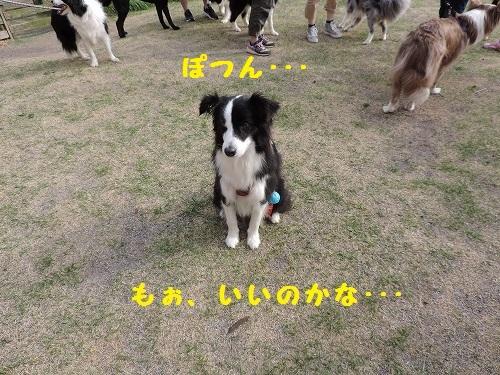 s-DSCN0794.jpg