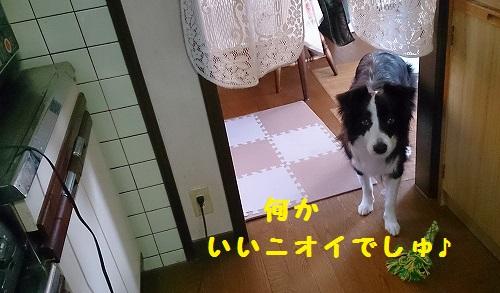 s-IMG_20150125_192831.jpg