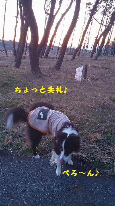 s-IMG_20150210_194338.jpg