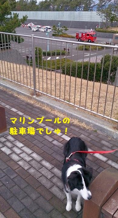 s-IMG_20150222_173825.jpg
