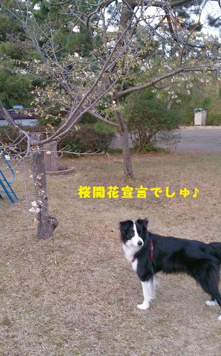 s-IMG_20150323_191321.jpg