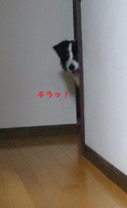 s-IMG_20150414_144232.jpg