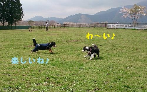 s-IMG_20150418_191932.jpg