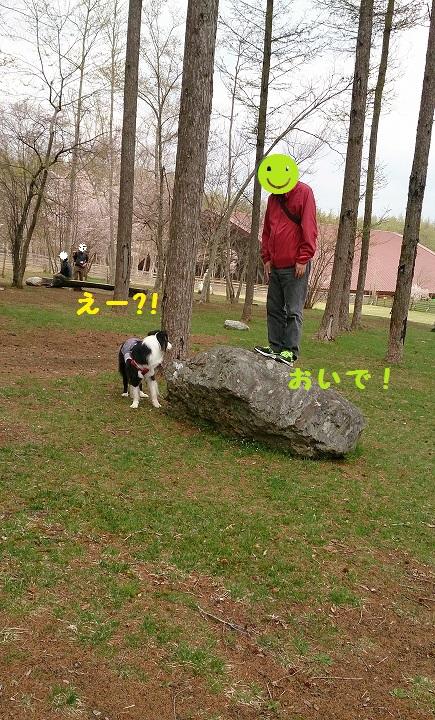 s-IMG_20150427_140532.jpg