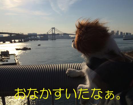 20150211-12.jpg