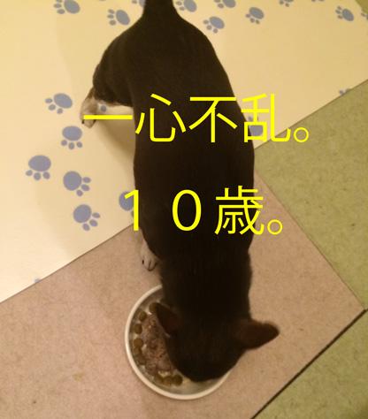 20150303-10.jpg