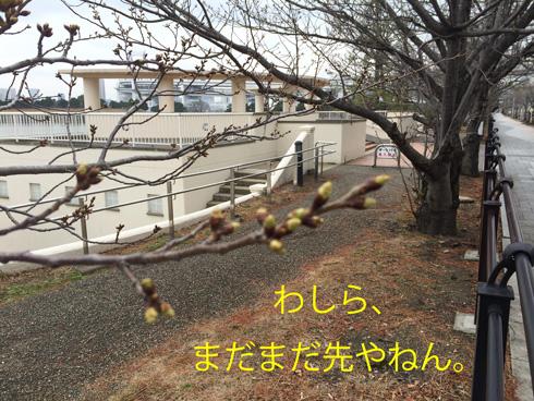 20150308-4.jpg