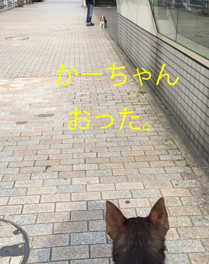 20150316-15.jpg