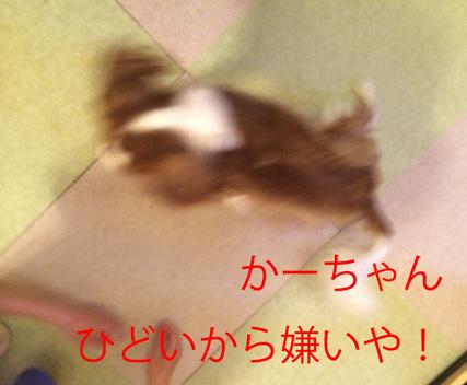 20150330-5.jpg