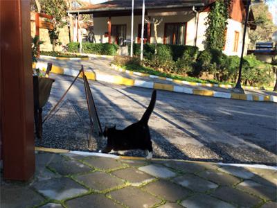クルシュンル猫さま