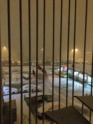 ゆ、雪が降ってた!